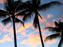 Palm trees at sunset. With clouds in background Royalty Free Stock Images