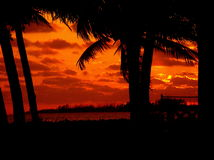 Palm trees and sunset. Taken in the bahamas Royalty Free Stock Photography
