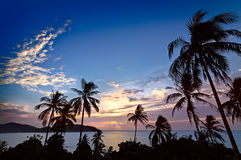 Palm trees at sunset Stock Image