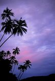 Palm Trees at Sunset. This image was shot in Malaysia's Perhentian Islands Royalty Free Stock Photos