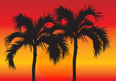 Palm Trees at Sunset. A bright, colorful sunset illustration with the silhouette of two tropical palm tree in the middle Royalty Free Stock Images