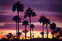 Palm trees and sunset. Beautiful sunset in tropics with palm trees Stock Image