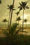 Palm Trees at Sunset. Koh Chang Stock Photos
