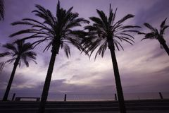 Palm trees in sunset Stock Images