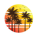 Palm Trees Sunset Stock Image