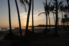 Palm trees sunset. Palm trees and fishing boats in Ngapali Myanmar Royalty Free Stock Photo