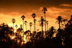 Palm trees sunset Royalty Free Stock Photos