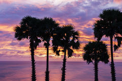 Palm trees at sunset Stock Images