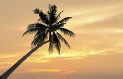 Palm trees Stock Photos