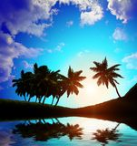 Palm trees a on  sunset background Royalty Free Stock Photo