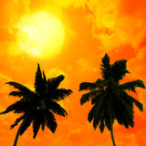Palm trees a on  sunset background Royalty Free Stock Photography