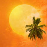 Palm trees a on  sunset background Stock Photos