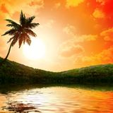 Palm trees a on  sunset background Royalty Free Stock Images