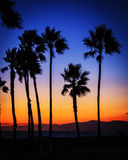Palm trees at sunset. Palm trees on the beach at sunset Royalty Free Stock Photos