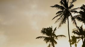Palm trees and sunset. Palm trees at sunset on the beach stock video footage