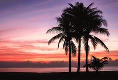 Palm trees sunset beach Royalty Free Stock Photo