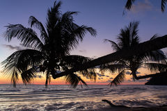 Palm trees during sunset on a beautiful tropical beach on Koh Kood island. In Thailand Royalty Free Stock Photo