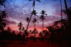 Palm trees in the sunset on the Caribbean coastline. Beautiful, colorful sunset with palm trees on the beach in the Caribbean Stock Photography