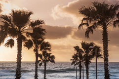 Palm trees on sunset Stock Photography