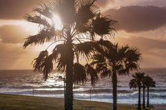 Palm trees on sunset Royalty Free Stock Photos