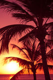 Palm Trees Sunset Royalty Free Stock Images