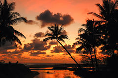 Palm Trees Sunset Colorful Sky backlight ,Thailand Stock Photos