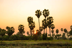 Palm trees with sunset. Stock Photos