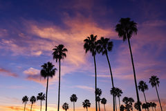 Palm Trees in Sunset Stock Photography