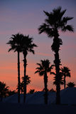 Palm Trees at sunset. Stock Images