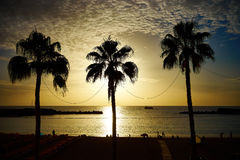 Palm trees before sunset with few clouds Royalty Free Stock Photography