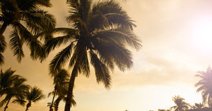 Palm trees in sunset golden Royalty Free Stock Photography