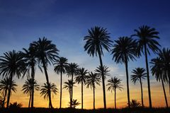 Palm trees sunset golden blue sky backlight. In mediterranean Stock Photo