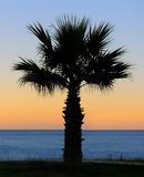 Palm trees sunset Royalty Free Stock Image