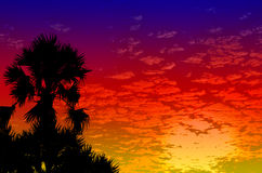 Palm trees sunset golden blue sky Stock Photography