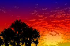 Palm trees sunset golden blue sky Stock Photos