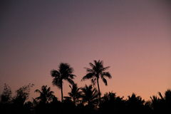 Palm trees at sunset in Guam Stock Photos