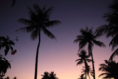 Palm trees at sunset in Guam Stock Images