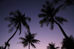 Palm trees at sunset in Guam Royalty Free Stock Photo