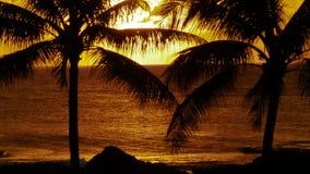Palm Trees and Sunset Hawaii