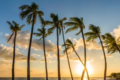 Palm Trees at Sunset in Hawaii Royalty Free Stock Photo