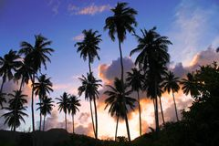 Palm trees, sunset, coconuts, palmiers. Silhouettes palm trees in sunset , mountains, with beautiful sky coforful Stock Photography
