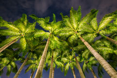 Palm trees during Stock Image