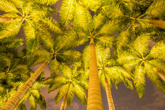 The palm trees during the sunset hours. Palm trees during the sunset hours Stock Photos