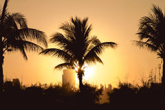 Palm trees and sunset Stock Photography