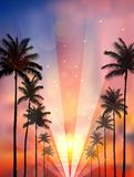 Palm trees at sunset Royalty Free Stock Photos