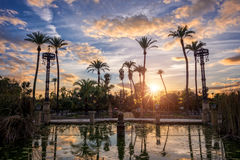 Palm trees in the sunset in Maria Luisa park in Seville, Spain. Palm trees in the sunset in Maria Luisa park in Seville, Andalusia, Spain royalty free stock image