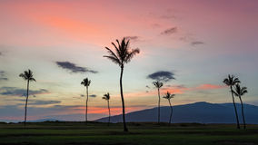 Palm trees at sunset on maui. Palm trees at sunset from village by the sea on the island of maui, hawaii Royalty Free Stock Image