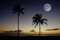 Palm Trees Sunset Near Ocean Beach Tropical Location Full Moon Royalty Free Stock Image