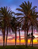 Palm trees on sunset. Close view Stock Images