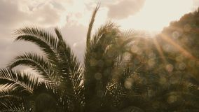 Palm trees and sunset. Slowmotion 50 fps stock video footage
